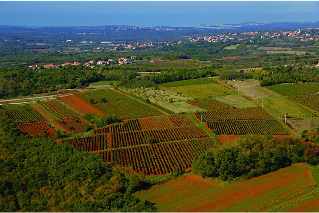 Vinogradi Poletti
