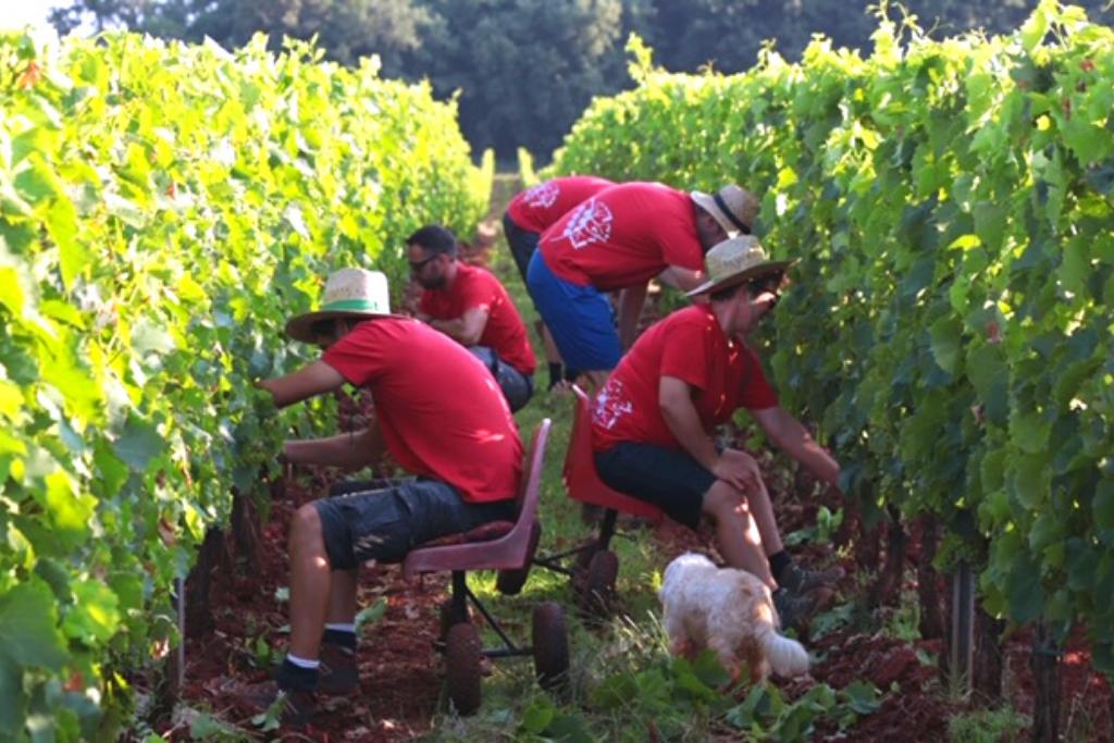 Tim za uređivanje vinograda
